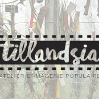 Association - Tillandsia
