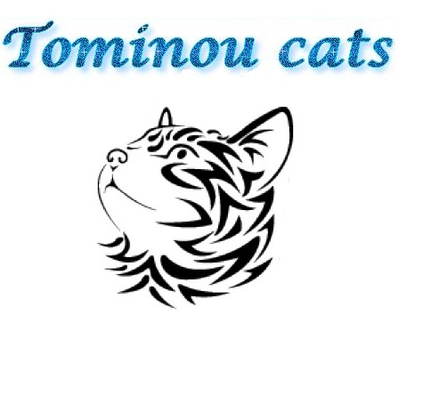 Association Tominou Cats