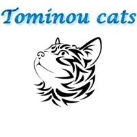 Association - Tominou Cats