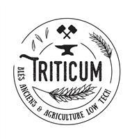 Association - Triticum