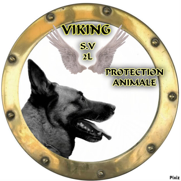 Association - Viking SV2L Protection Animale