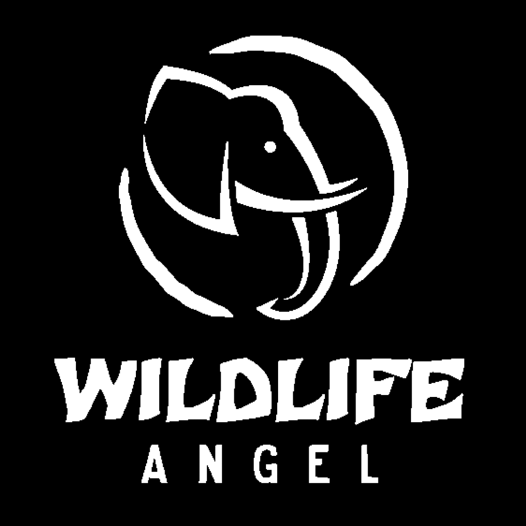 Association WILDLIFE ANGEL