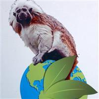 Association - Zoo Le Nouveau Monde