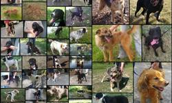 voici une partie de nos pensionnaires - A.S.A association pour le secours aux animaux