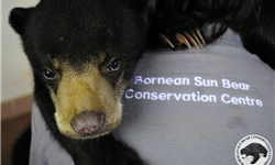 AVES France soutient le Borneo Sun Bear Conservation Center ! - AVES France