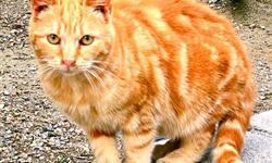 Les amis des chats de Port-Vendres