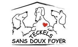Teckels Sans Doux Foyer