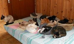 L'Ecole du Chat de Lanvaux