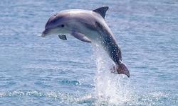 Helpdolphin