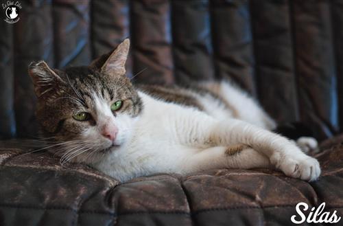 Appel A L Aide Pour Les Chats De Garidech 31