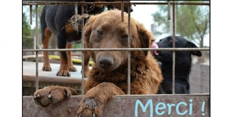 Devenir adhérent de l'association - Nobody's dog France