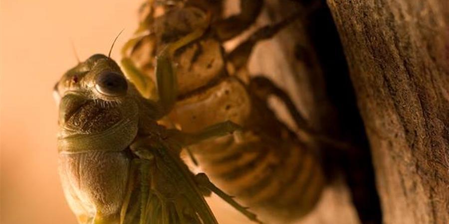 Devenir adhérent Autres Regards sur l'Environnement piémont-biterrois - Autres Regards sur l'Environnement piémont Biterrois
