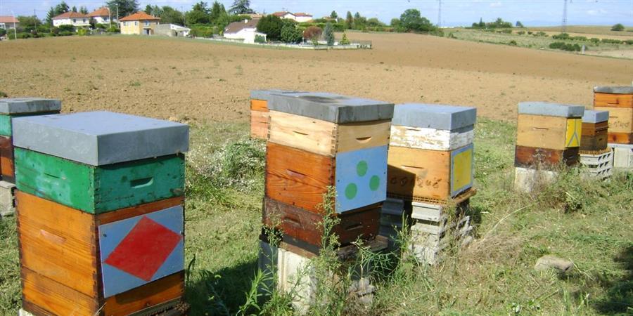 Initiation à l'apiculture 2021 - Les amis des abeilles