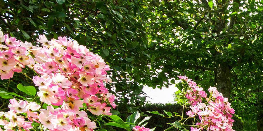 Adhésion et renouvellement de cotisation 2019 - Union des Parcs et Jardins de Basse-Normandie