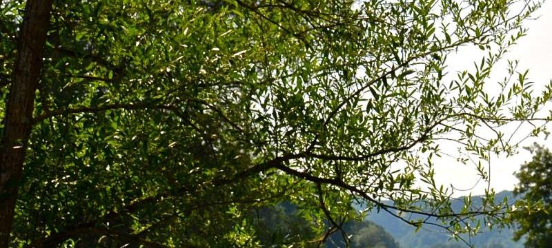 Devenez membre de l'Association des Amis du Val Fleuri - Les amis du Val Fleuri