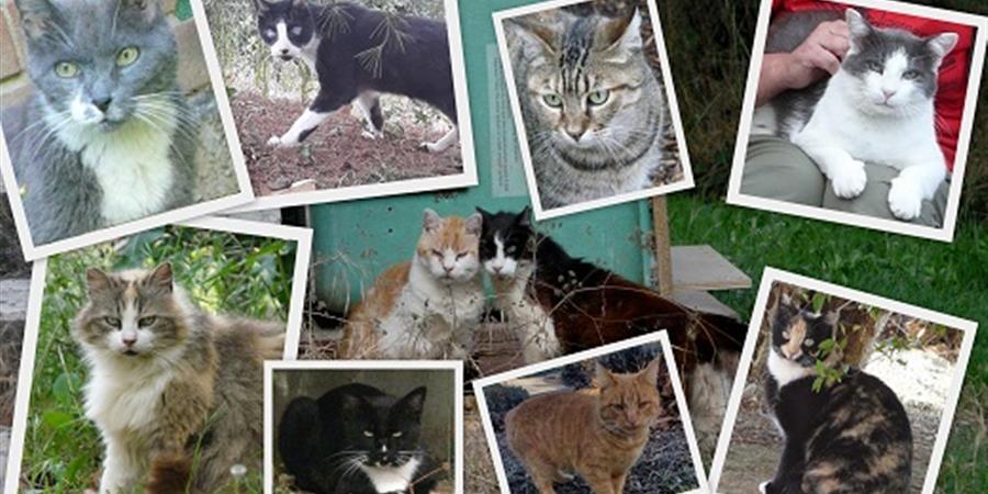Adhésion Annuelle - Les Chats de Rangueil