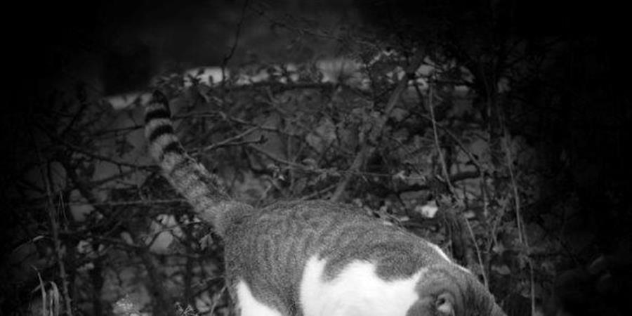 Formulaire d'adhésion - association les chats bottes