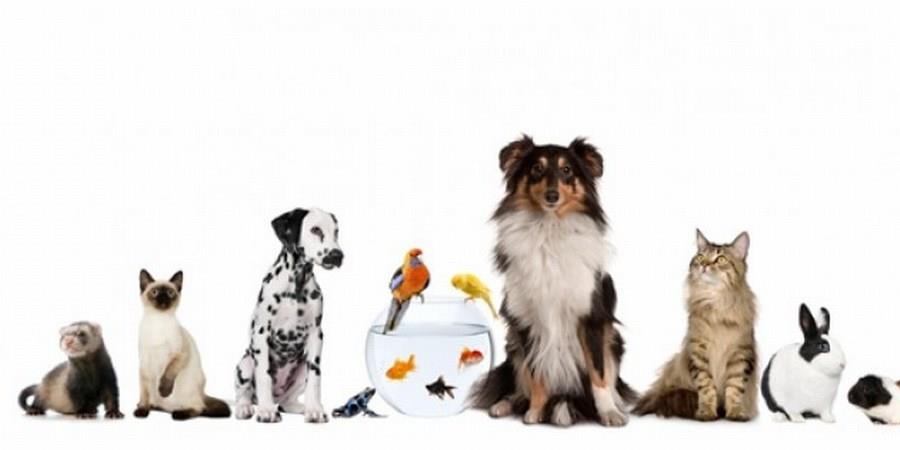 Adhésion annuelle - Cats Rescue 28
