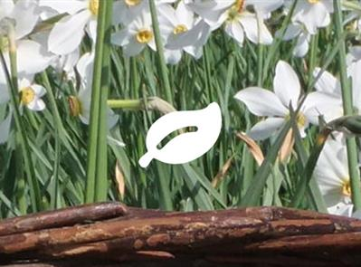 Fédération des Paysan-ne-s Herboristes - Adhésion en ligne - Fédération des Paysan-ne-s Herboristes