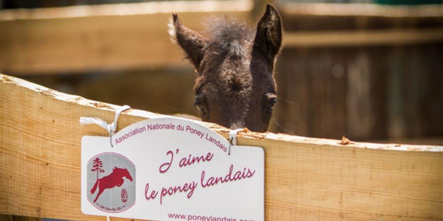 Adhésion 2020 - Association Nationale du Poney Landais