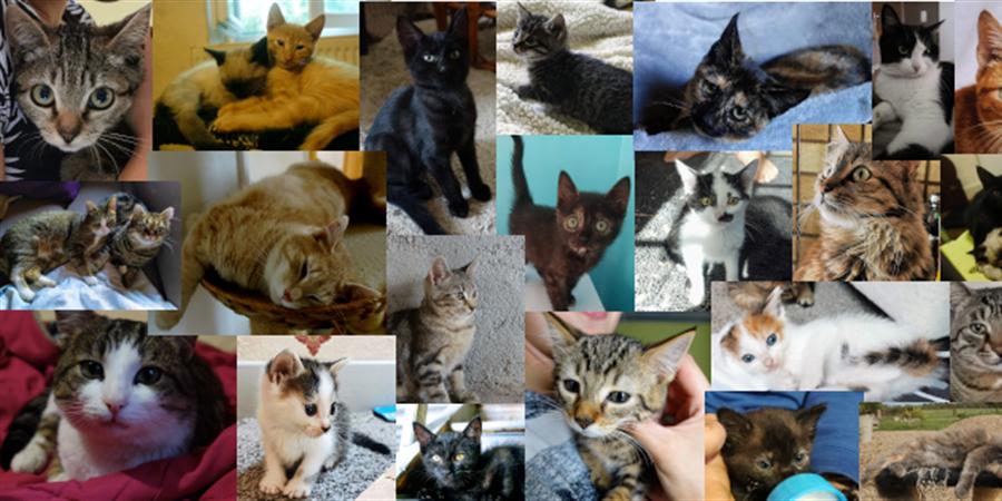 Adhésion 2021 - Association espoir de chats