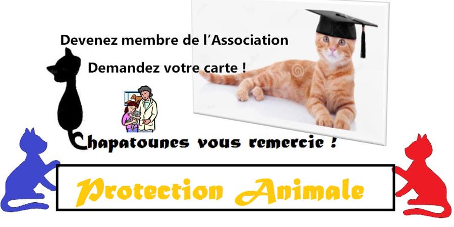 Carte membre - Chapatounes