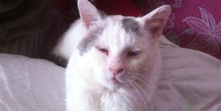 ADHESION 2020 - les chats'sociés