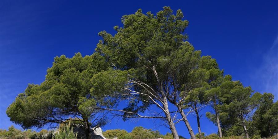 Devenez membre de l'association Forêt Modèle de Provence ! - Forêt Modèle de Provence