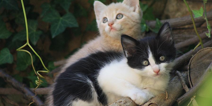 Bulletin d'adhésion - La Cie des chats de la Capelle et Masmolène