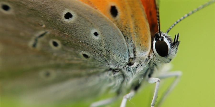 Aidez, encouragez, soutenez le CEN Aquitaine ! - Conservatoire d'espaces naturels (CEN) Aquitaine