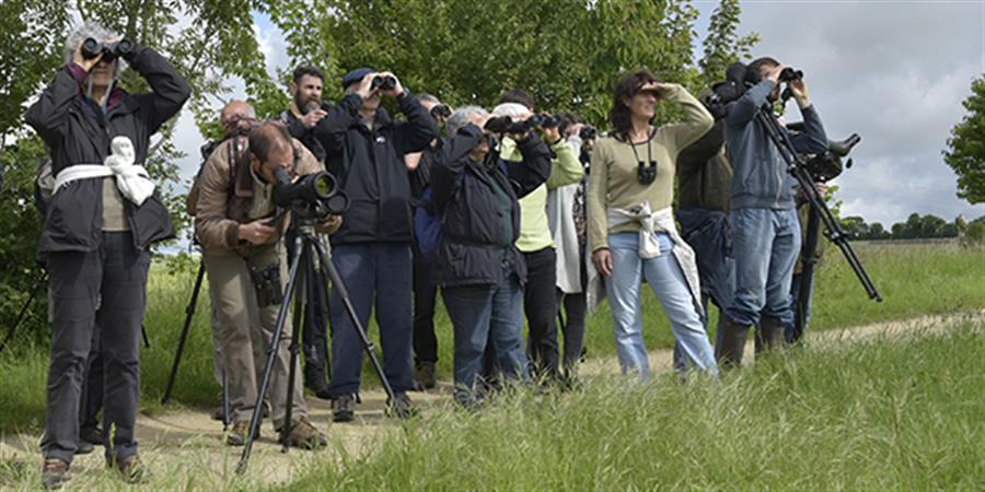 Soutenez le Groupe Ornithologique des Deux-Sèvres - 2020 - Groupe ornithologique des Deux-Sèvres