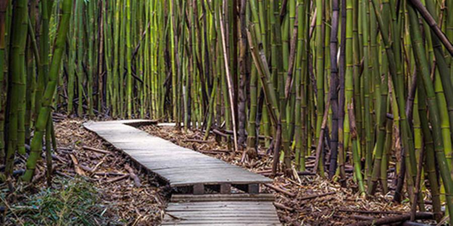 Cours de Qi Gong et de Tai Chi Chuan - Les Pas en Soi - TAI CHI VIET