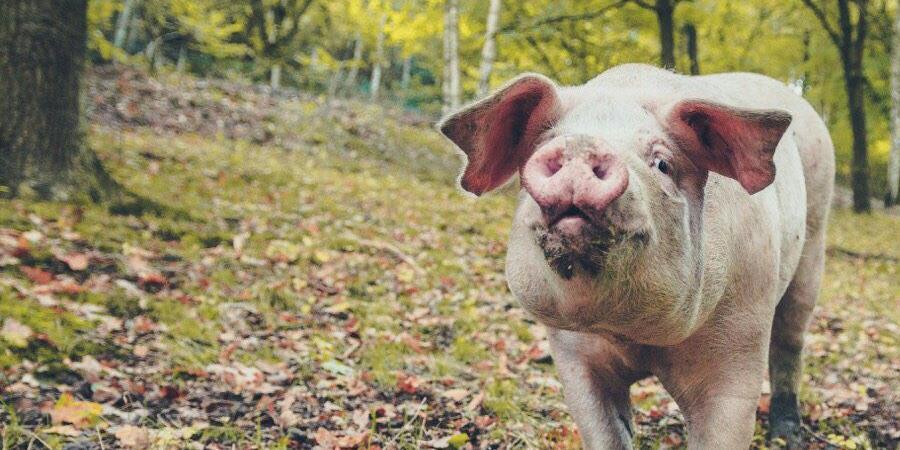 Adhésion à l'association et sanctuaire 269 Life Libération Animale - 269 Life Libération Animale