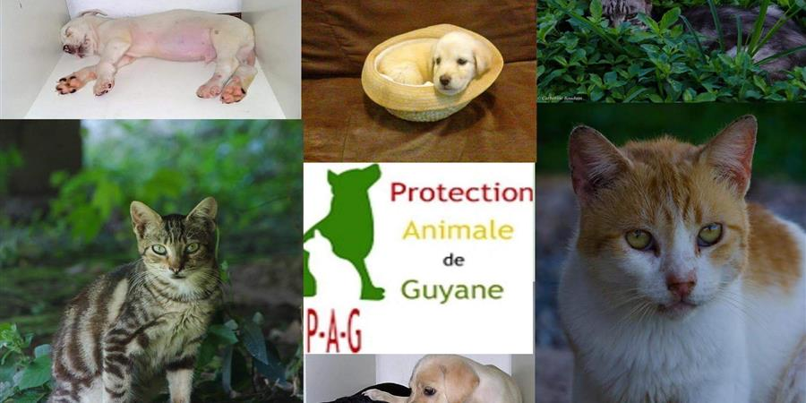 Adhésions 2020 à l'association la PAG - Protection Animale de Guyane - Protection Animale de Guyane