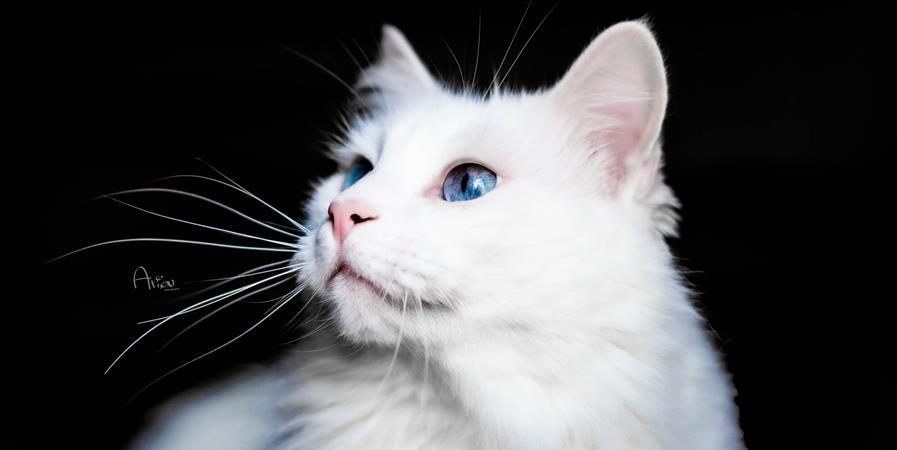 Rejoignez la meute - Donate Music and animals