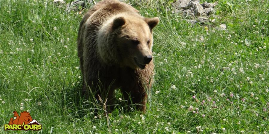 Devenez parrain d'une espèce du Parc'Ours ! - Parc'Ours