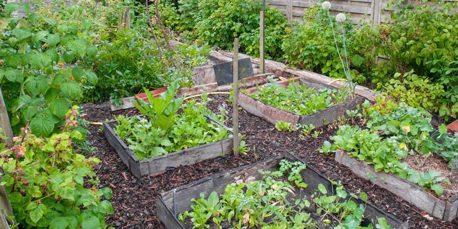 THERMIE Permaculture - THERMIE