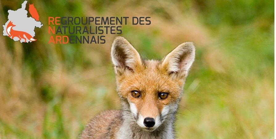 Adhésion ReNArd - REgroupement des Naturalistes ARDennais (ReNArd)