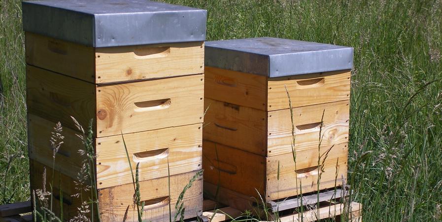 Année 2020 - Association des apiculteurs de Sélestat - Association des apiculteurs de Sélestat, Muttersholtz et Environs