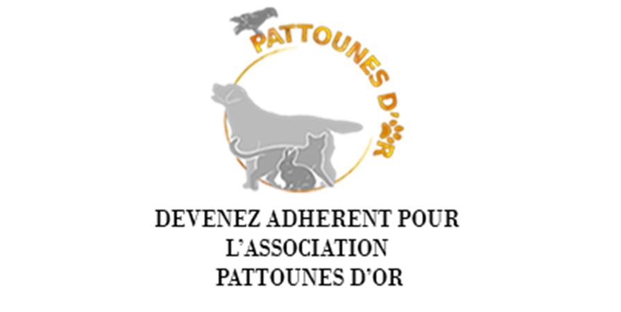 Bulletin d'adhésion 2019 Association Pattounes D'Or - Pattounes D'Or