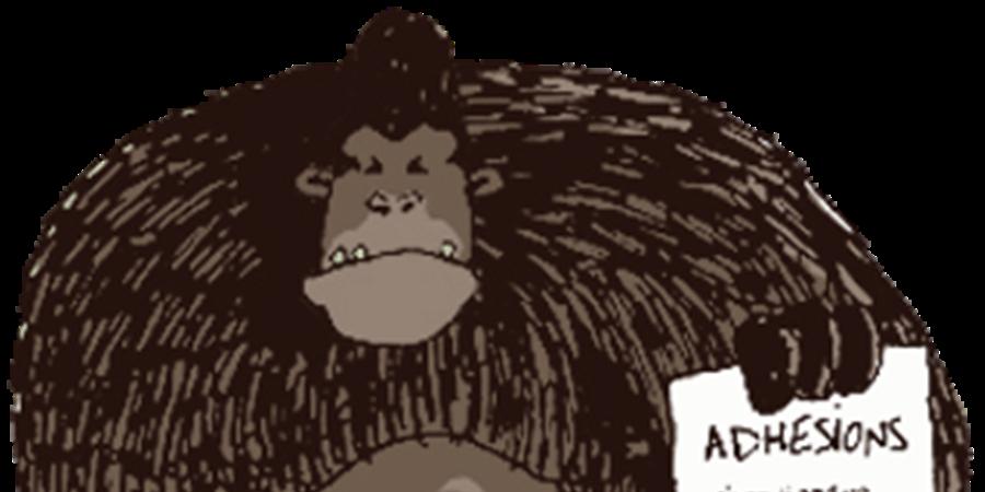 J'adhère aux Singes - Les singes
