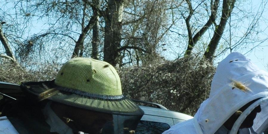 BULLETIN D'ADHÉSION 2019 À L'ADAGE - ADAGE