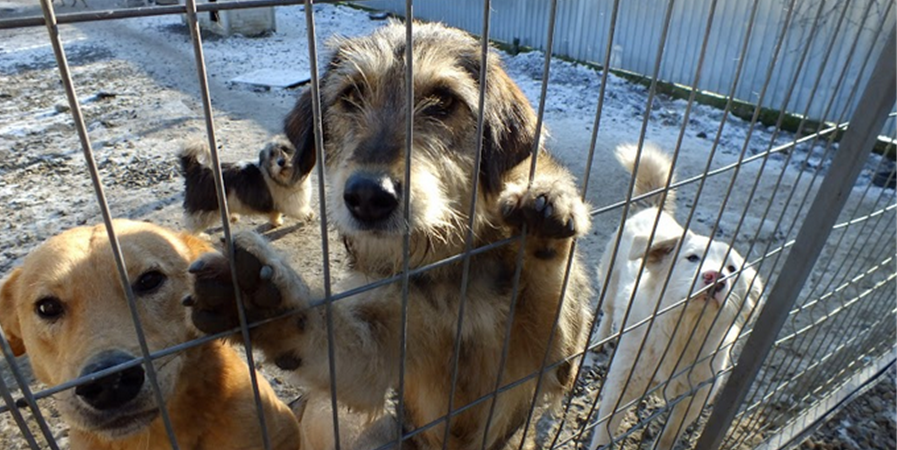 REMEMBER ME PARK, un refuge en France dédié au sauvetage des chiens roumains - Association Remember Me