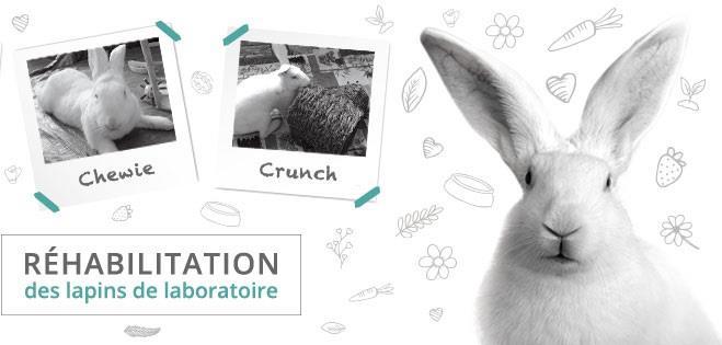 Parrainer un lapin de laboratoire - White Rabbit