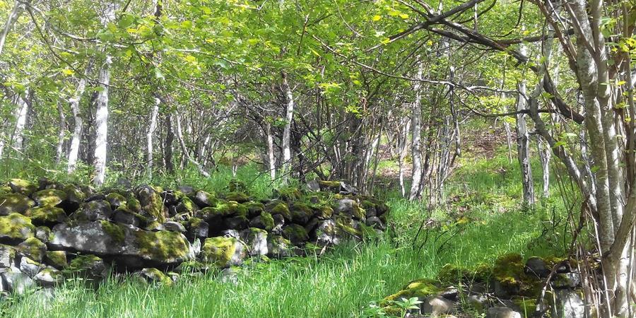 Agissez localement pour la protection de l'environnement et de la biodiversité - Les Pailhats de Serre Bas