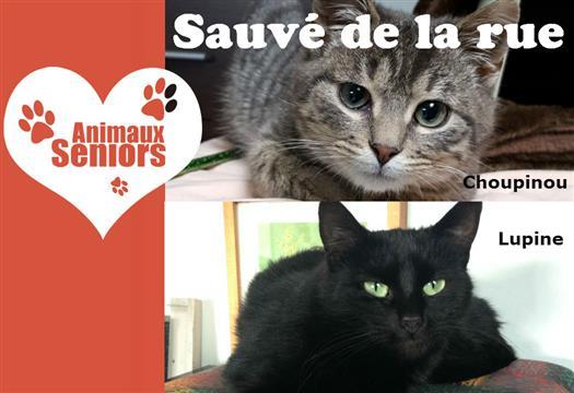 Sauvetage chats abandonnés au bord du périphérique - Animaux Séniors