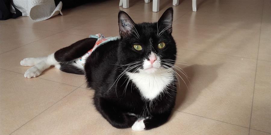 Pour Replay, le chat handicapé - L'école du Chat d'Ollioules