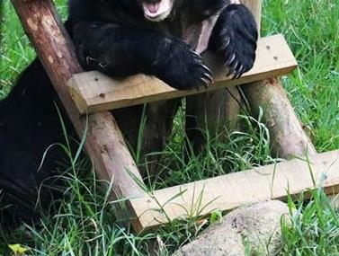 Pour aider la fondation Animals Asia - Animals Asia France