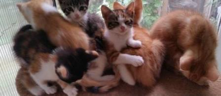 Stérilisation, identification des chats errants et construction d'une chatterie  - asso dame
