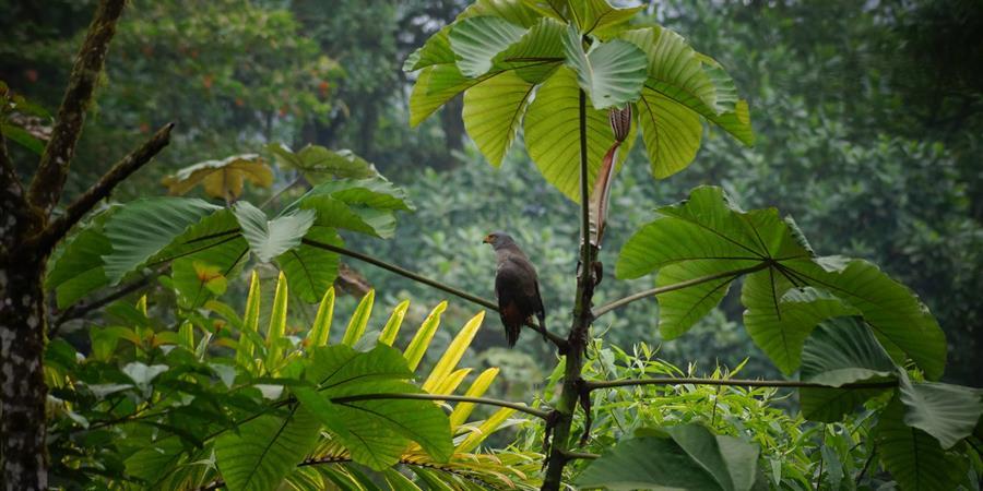 Des animaux pour préserver la Biodiversité !  - MakiGo